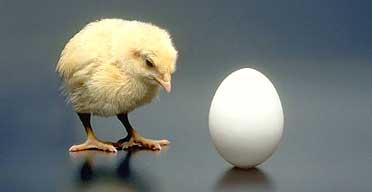 chicken or egg1
