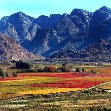 No, I'm not showing you a picture of a penis transplant! Here is a beautiful picture of South Africa's landscape.
