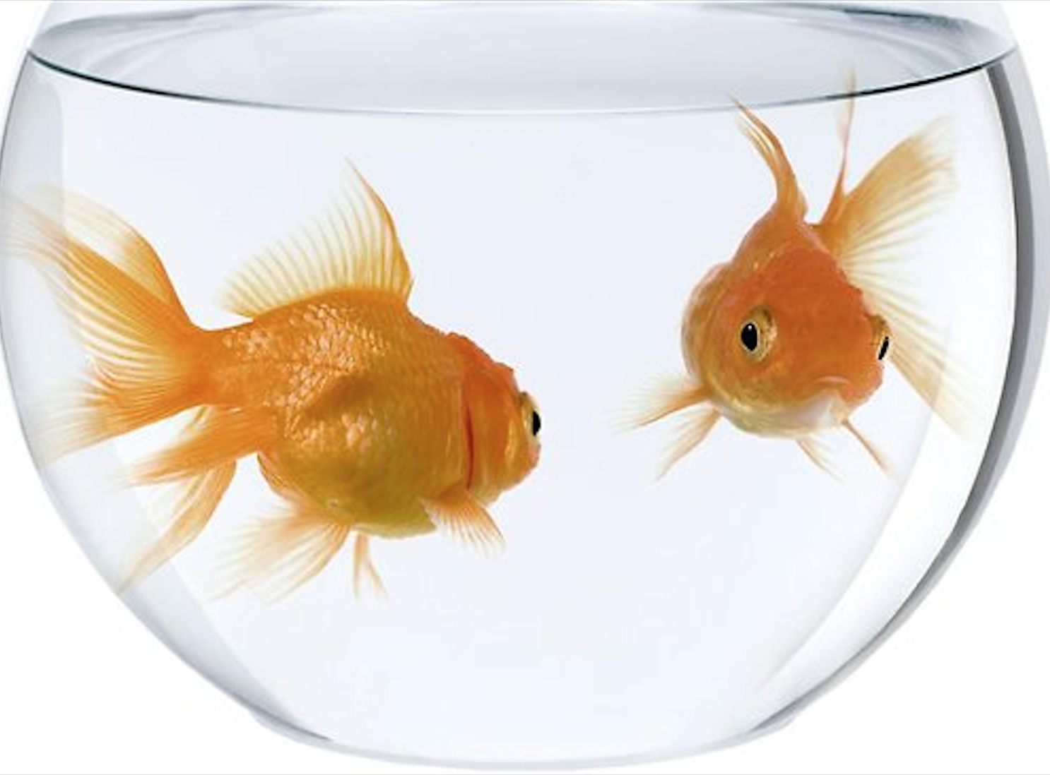 sex in a fish bowl rules